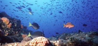 珊瑚墨西哥礁石 免版税库存照片