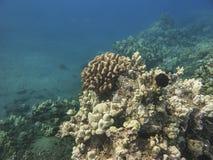 珊瑚岩石 免版税库存照片