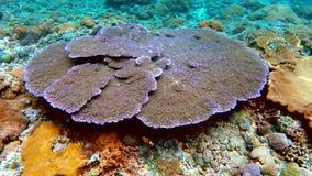 珊瑚庭院在印度洋,巴厘岛,印度尼西亚 影视素材