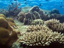 珊瑚庭院远景 免版税图库摄影