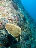 珊瑚庭院远景 免版税库存照片