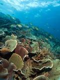 珊瑚庭院远景 库存图片