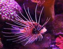 珊瑚异乎寻常的鱼礁石 免版税库存照片