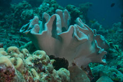 珊瑚形成 免版税库存图片