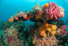 珊瑚彩虹 免版税库存照片
