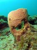 珊瑚微笑 免版税库存图片