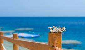 珊瑚或礁石片断在木篱芭有绳索的插入a 库存照片