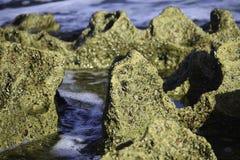 珊瑚摇滚形成特写镜头作为浪潮流出, Uvongo,南非 免版税图库摄影