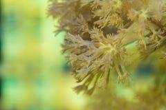 珊瑚是非常接近的 库存图片