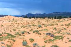 珊瑚桃红色沙丘国家公园在日落的犹他 库存图片