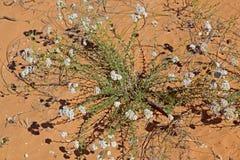 珊瑚桃红色沙丘国家公园,犹他,美国 免版税库存照片