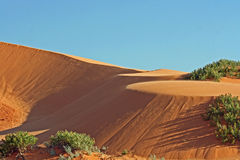 珊瑚桃红色沙丘 免版税库存图片