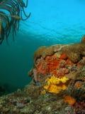 珊瑚橙黄色 免版税库存图片