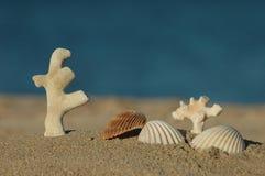 珊瑚死海壳 库存照片