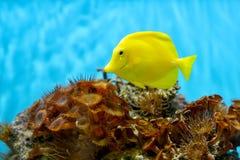 珊瑚殖民地的照片,红海,埃及 免版税库存图片