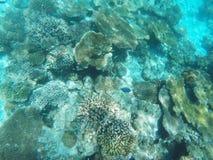 珊瑚水下的射击  免版税库存图片