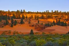 珊瑚沙丘停放桃红色状态日落 免版税库存图片