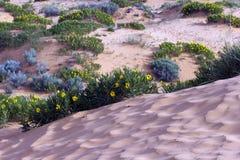 珊瑚沙丘公园粉红色沙子状态 免版税库存图片