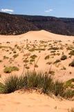 珊瑚沙丘桃红色沙子 库存图片