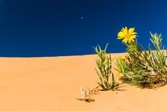 珊瑚沙丘桃红色沙子 免版税图库摄影