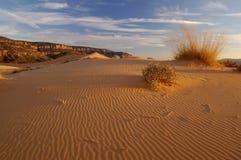 珊瑚沙丘桃红色波纹沙子 免版税库存照片