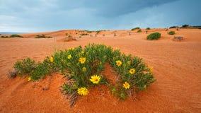 珊瑚沙丘kanab公园粉红色沙子状态美国犹他 免版税图库摄影