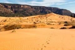 珊瑚沙丘kanab公园粉红色沙子状态美国犹他 免版税库存图片