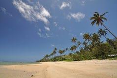 珊瑚海岸,斐济 免版税库存照片