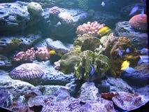 珊瑚海底 免版税库存图片