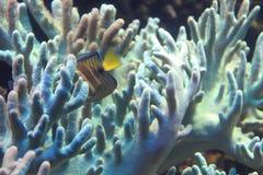 珊瑚海背景 免版税图库摄影