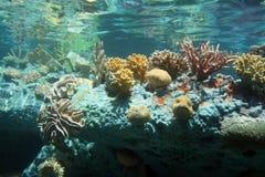 珊瑚海 免版税图库摄影