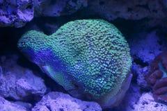 珊瑚深海 库存图片