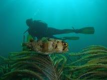 珊瑚潜水员鱼礁石 图库摄影