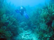 珊瑚潜水礁石 库存照片
