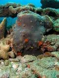 珊瑚灰色礁石 免版税库存图片