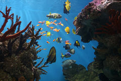 珊瑚热带鱼海洋的礁石 免版税库存照片