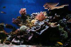 珊瑚热带鱼海洋的礁石 图库摄影