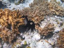 珊瑚猬礁石海运 免版税库存图片