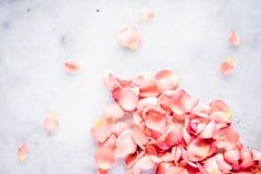 珊瑚玫瑰在年的大理石、颜色-花背景,假日和花卉艺术概念的花瓣 免版税库存图片