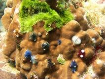 珊瑚生活礁石海运泰国 图库摄影