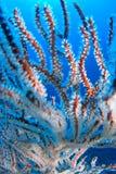 珊瑚电汇 库存图片