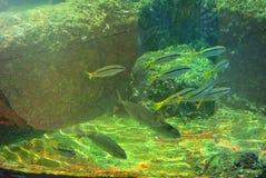 珊瑚的明亮的颜色 埃拉特 以色列 免版税库存图片