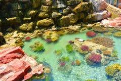 珊瑚的明亮的颜色 埃拉特 以色列 库存图片