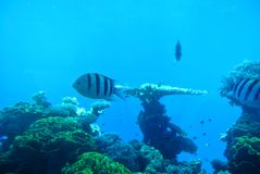 珊瑚的明亮的颜色 埃拉特 以色列 图库摄影