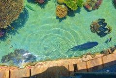 珊瑚的明亮的颜色 埃拉特 以色列 免版税库存照片