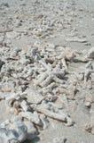 珊瑚的片段 免版税图库摄影