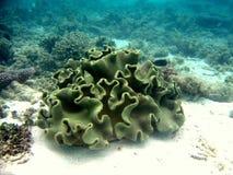 珊瑚皮革 库存图片