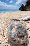 珊瑚石头 免版税库存图片