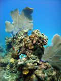 珊瑚石峰 免版税图库摄影