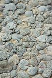 珊瑚石样式 库存照片
